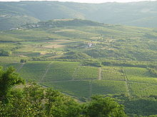 Croatian Vineyard (Wikipedia)