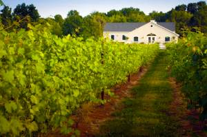 www.hopewellvalleyvineyards.com